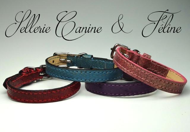 Sellerie Canine & Féline